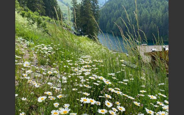 5 - Blick über Blumenwiesen zum See