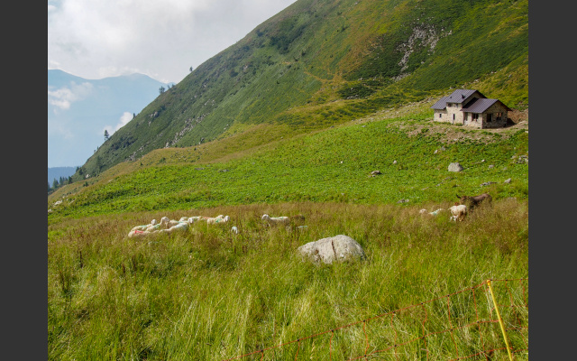 Schafe und Esel auf eingezäunter Weide