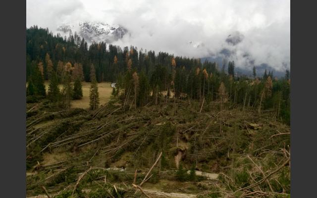 Zerstörtes Waldstück Nahe Karerpass