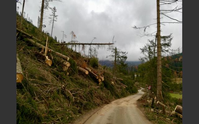 Zerstörtes Waldstuck Nahe Karerpasse