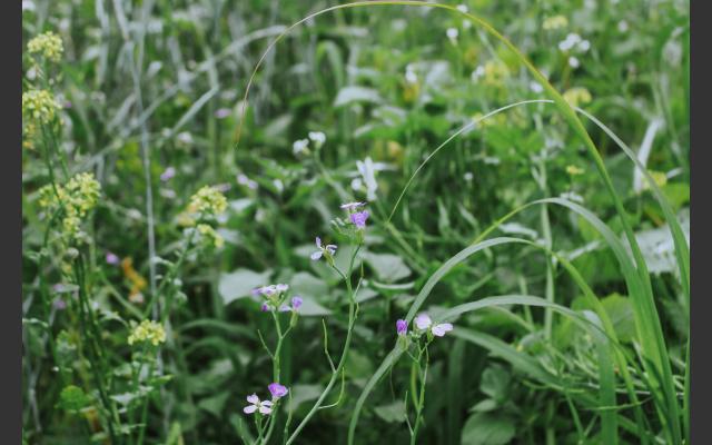 pflanzen-artenvielfalt_oekologische_nische.jpeg