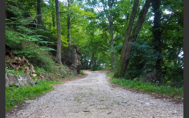 Waldweg zum Sternberg