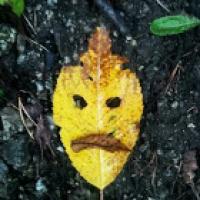 Bild des Benutzers lupo rosso