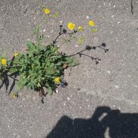 Bild des Benutzers Biodiversität und Naturschutz