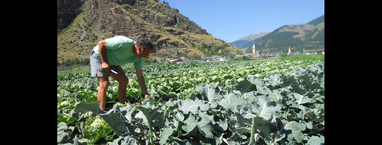 Perspektiven der Sozialen Landwirtschaft