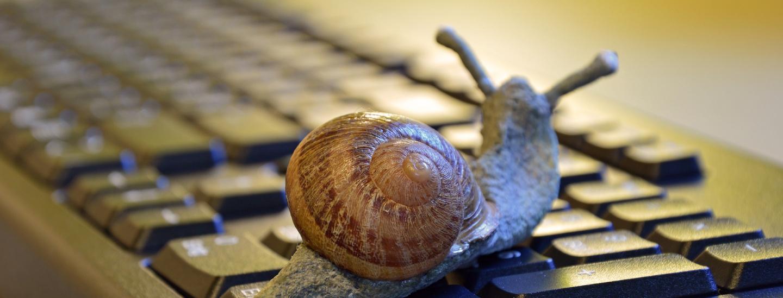 snail-3901655_1920.jpg