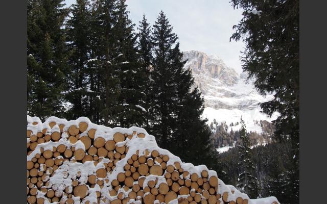Holzstapel am Nigerpass